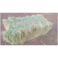 Multicube Teff Hay Bale. Low Sugar Pasture Hay